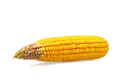 Corn cob isolated on white. Background Royalty Free Stock Photography