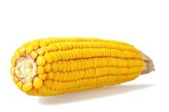 Corn cob isolated on white. Background Stock Photo