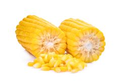 Corn on the cob isolated on white. Background Royalty Free Stock Image