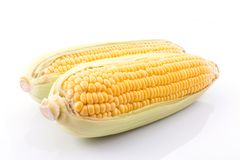corn cob isolated on white background with. with green leaves Stock Images