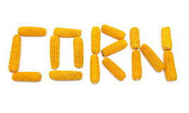 Corn on the cob isolated on white background Royalty Free Stock Photography