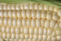 Corn on the Cob Kernels Stock Photo