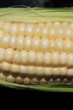 Corn on the Cob Kernels Stock Photography