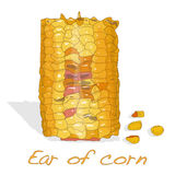 Corn on the cob kernels Royalty Free Stock Images