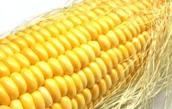 Corn on the cob kernels Stock Image