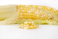 Corn On The Cob Kernels With Cob In The Background. Corn on the cob kernels with a defocused cob in the background Stock Photos