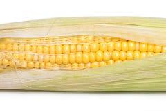 Corn on the cob kernels Stock Photography