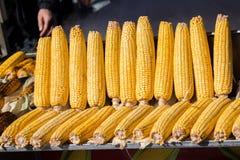 Corn on the cob kernels peeled Royalty Free Stock Image