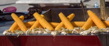 Corn on the cob kernels peeled Stock Photography