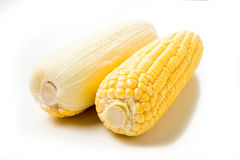 Corn on the cob kernels on white isolated background Royalty Free Stock Photo
