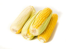 Corn on the cob kernels on white isolated background Royalty Free Stock Photos