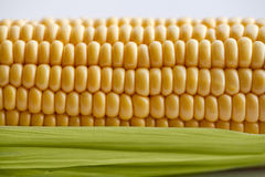 Corn on the cob. With leaves Stock Photos