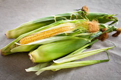 Corn on the cob. With leaves Royalty Free Stock Image