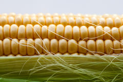Corn on the cob. With leaves Royalty Free Stock Images