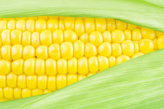 Corn cob. Corn on the cob with leaves close up Stock Photography