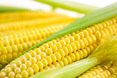 Corn cob with leaves Royalty Free Stock Photos