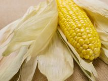 Corn on the cob, on linen fabric Royalty Free Stock Images