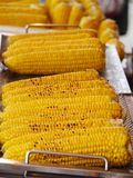 Corn of the cob Royalty Free Stock Photos