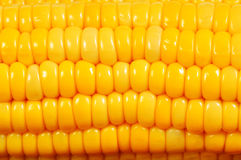 Corn cob macro Royalty Free Stock Images