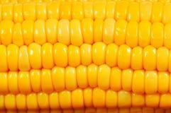Corn cob macro Royalty Free Stock Images