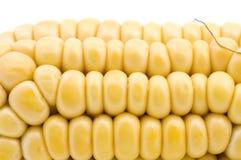 Corn in cob macro stock photo