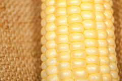 Corn on the cob macro Royalty Free Stock Photos