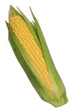 Corn cob or maize isolated Royalty Free Stock Image