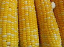 Corn on the cob. With melting butter Stock Images