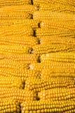 Corn, cob, multiple, yellow, ripe, grain, food. Ripe corn cobs fence. Plenty of ears of corn Stock Images