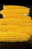 Corn, cob, multiple, yellow, ripe, grain, food. Multiple ripe ears of corn on black background Royalty Free Stock Photo