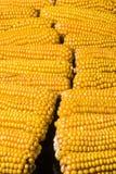 Corn, cob, multiple, yellow, ripe, grain, food. Plenty of ears of corn. Ripe corn cobs fence Royalty Free Stock Photography
