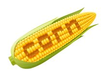 Corn cob. Organic food. Royalty Free Stock Photography