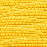 Corn cob. Organic food pattern. Stock Photos