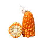 Corn on the cob. Over white background Stock Images