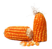 Corn on the cob. Over white background Royalty Free Stock Images