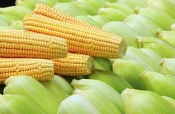 Corn Cob Stock Photography