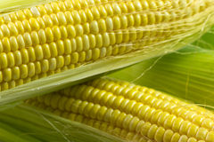 Corn cob Stock Photo