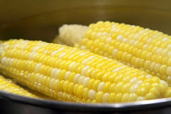 Corn on the cob Royalty Free Stock Photo