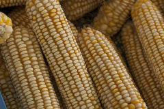 Corn on the cob. Ripe yellow corn on the cob Royalty Free Stock Photography