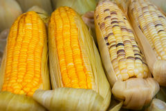 Corn on the Cob for Sale at Vendor's Stall Royalty Free Stock Photography