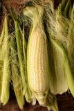 Corn on the Cob Shucked Royalty Free Stock Photos