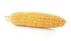 The  corn cob Stock Photography