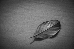dry leaf on the beach Royalty Free Stock Images