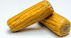 Corn cob. Surrounded by white background Stock Images