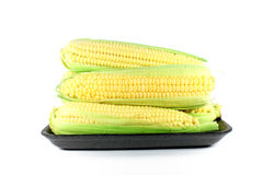 Corn cob sweetcorn Royalty Free Stock Photo