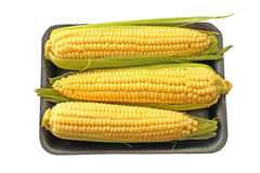 Corn cob sweetcorn Royalty Free Stock Image