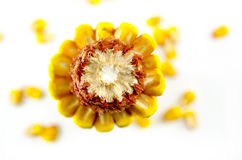 Corn cob taken from above, isolated Stock Images