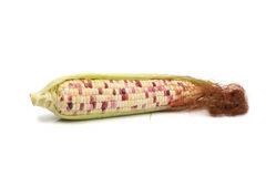 Corn on the cob Stock Photos