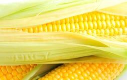 Corn cob Royalty Free Stock Photo