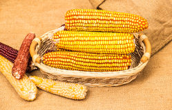 Corn cob in wicker basket Stock Photo